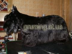 Стрижка котов и собак. Днепропетровск